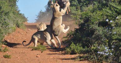 Parco Nazione del Kruger, una delle meraviglie del mondo